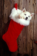 Garry Gay - Puppy in Christmas...