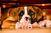 Puppy Photo Originals - Puppy in new home by Mark Evans