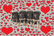 Multiples Photos - Puppy Love by Aimee L Maher