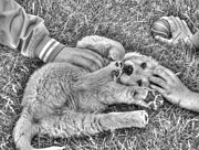 Puppy Love Print by Bianca Nadeau