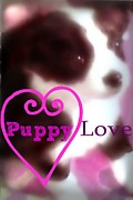 Puppy Mixed Media - Puppy Love by Sherry Gombert