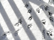 Kate Gallagher - Puppy Paw Prints and Shadows