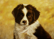 Dry Stone Wall Framed Prints - Puppy portrait Framed Print by John Silver