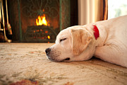 Fireplace Prints - Puppy Sleeping by a Fireplace Print by Diane Diederich