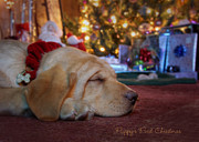 Happy Labrador Prints - Puppys First Christmas Print by Lori Deiter