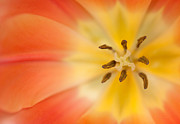 Pure Bliss Print by Reflective Moments  Photography and Digital Art Images