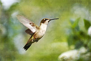 Wildlife In Gardens Posters - Pure Joy Hummingbird Poster by Christina Rollo