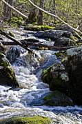Pure Mountain Stream Print by Bill Cannon