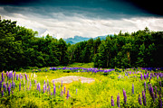 Lafayette Prints - Purple and Mountains and Majesty Print by Greg Fortier