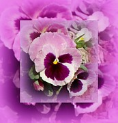 Gail Matthews Prints - Purple and Pink Pansy Print by Gail Matthews