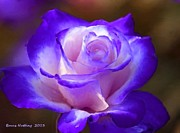 Purple And Pink Rose Print by Bruce Nutting