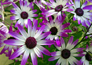 Purple And Green Prints - Purple and White Flowers Print by Ann Powell