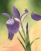 Birthday Present Paintings - Purple and White Iris by Sara Davenport