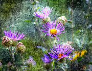 Aster  Digital Art - Purple Aster by Barbara Chichester