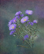 Purple And Green Posters - Purple Asters Poster by Angie Vogel
