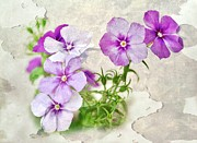 Purple Flowers Digital Art Prints - Purple Beauties Print by Cathie Tyler
