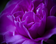Ron Roberts Photography Prints - Purple Beauty Print by Ron Roberts