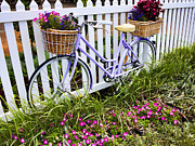 White Picket Fence Framed Prints - Purple Bicycle and Flowers Framed Print by David Smith