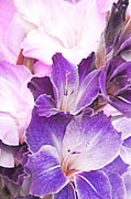 Soft Purple Posters - Purple Bouquet Gladiola Flowers Poster by Jennie Marie Schell