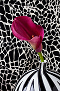 Flower Design Framed Prints - Purple calla lily Framed Print by Garry Gay