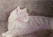 Pencils Paintings - Purple cat by Cybele Chaves