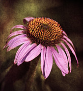 Nature - Purple Cone Flower II by Dale Kincaid