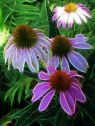 Kathie Mccurdy Prints - Purple Coneflower Echinacea Print by Kathie McCurdy