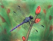 Insect Pastels Posters - Purple Dragonfly Poster by Christian Conner