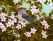 Rick Bainbridge - Purple Finch