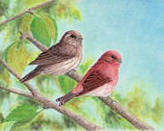 Finch Drawings Metal Prints - Purple finches Metal Print by Cristolin O