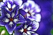 Cindy Boyd - Purple Flower Abstract