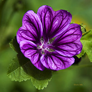 Purple Flowers Digital Art - Purple Flower Hollyhock by Christina Rollo