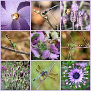Dragonflies Prints - Purple Flowers and Dragonflies Collage Print by Carol Groenen