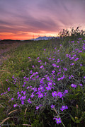 Malaga Prints - Purple flowers in the sand  beach Print by Guido Montanes Castillo