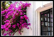 Florida Florals Photos - Purple Flowers on White Florida Home by Dora Sofia Caputo
