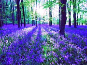 Dappled Light Digital Art - Purple forest flower carpet by Maureen Tillman