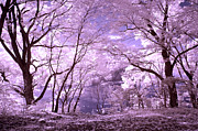 False Prints - Purple Forest Print by Paul W Faust -  Impressions of Light