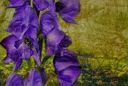 Foxglove Flowers Photos - Purple Foxglove by Andrea Kollo