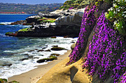 San Diego California Posters - Purple Glory at La Jolla Cove Poster by John Hoffman