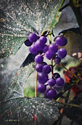 Grapevine Leaf Digital Art Posters - Purple Grapes - Oil Effect Poster by Brian Wallace