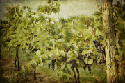 Silver Hills Winery Prints - Purple Grapes on the Vine Print by Jeff Swanson