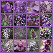 Purple Orchids Posters - Purple in Nature Collage Poster by Carol Groenen