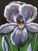 Livingstone Posters - Purple Iris Poster by Beverly Livingstone