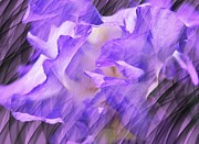 Purple Iris Flower Abstract Print by Judy Palkimas