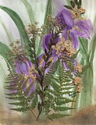 Floral Prints Prints - Purple Iris Flowers-Ferns-and Queen Annes Lace Print by Clementine Kondracki