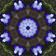 Doily Digital Art - Purple Iris Kaleidoscope by Kathy Clark