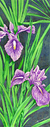 Botany Painting Prints - Purple Iris Print by Richard De Wolfe