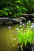 Landscaping Prints - Purple irises in pond Print by Elena Elisseeva