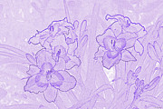 Concepts  Drawings - Purple Jubilation by Diana  Tyson