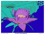 Gardens Digital Art Originals - Purple Lily Abstract by Eric  Schiabor